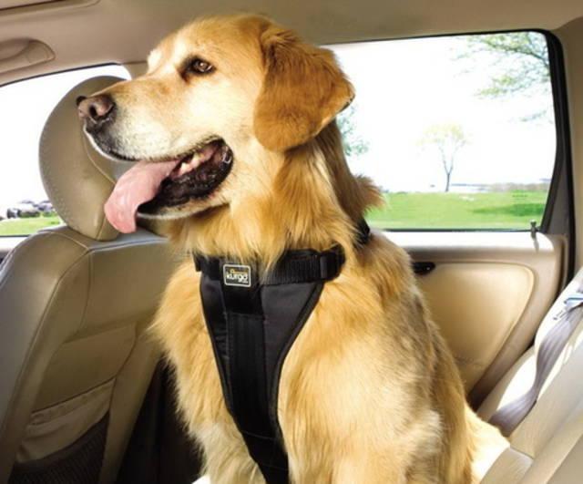 scarpe di separazione immagini dettagliate qualità e quantità assicurate Stati Uniti: cani in auto? Con la cintura