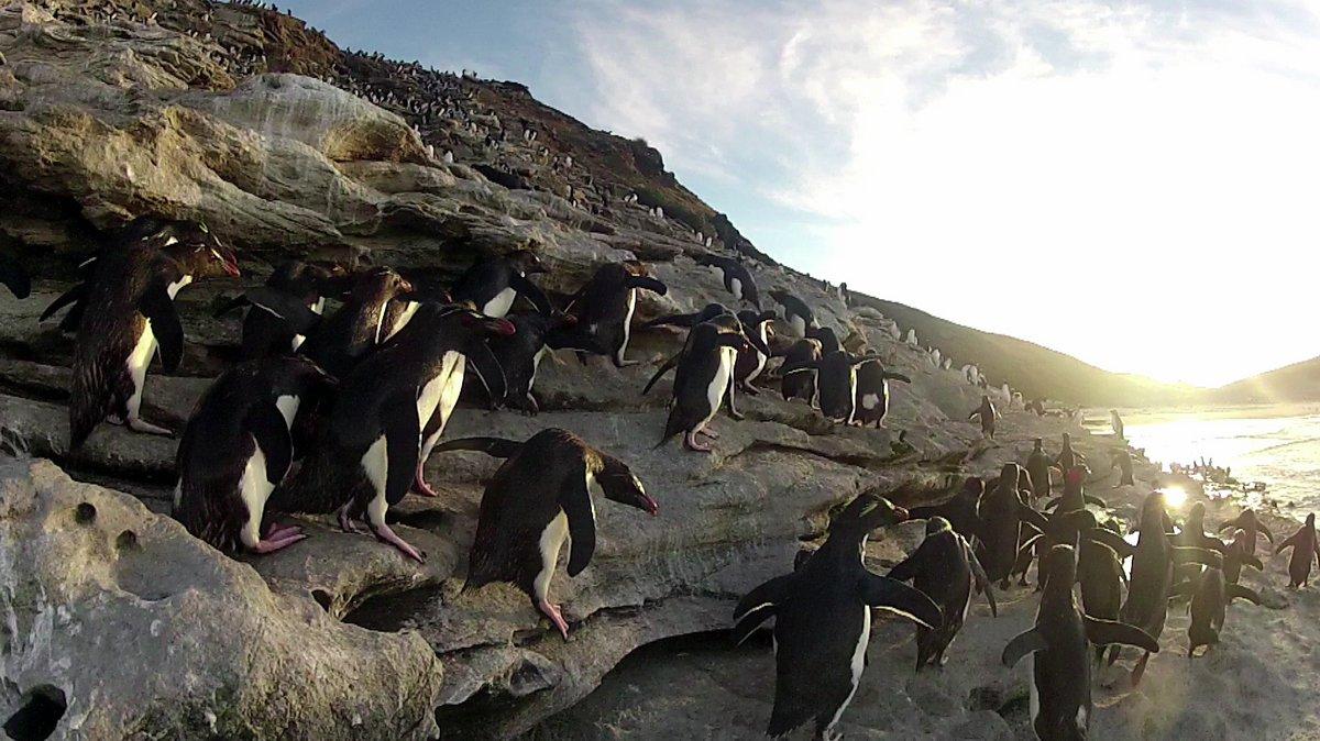 Foto i pinguini e la fiat panda 4x4 antartica for Idea casa sarno